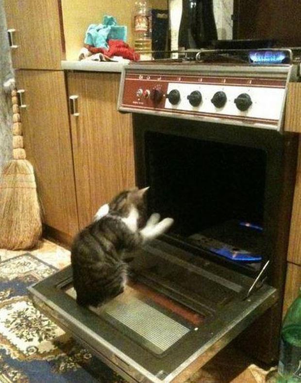 Ảnh hài: Khi 'boss' mèo cố gắng tỏ ra... bình thường-8