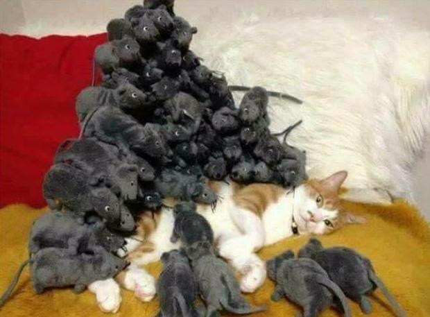Ảnh hài: Khi 'boss' mèo cố gắng tỏ ra... bình thường-9