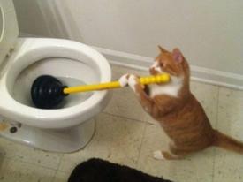 Ảnh hài: Khi 'boss' mèo cố gắng tỏ ra... bình thường