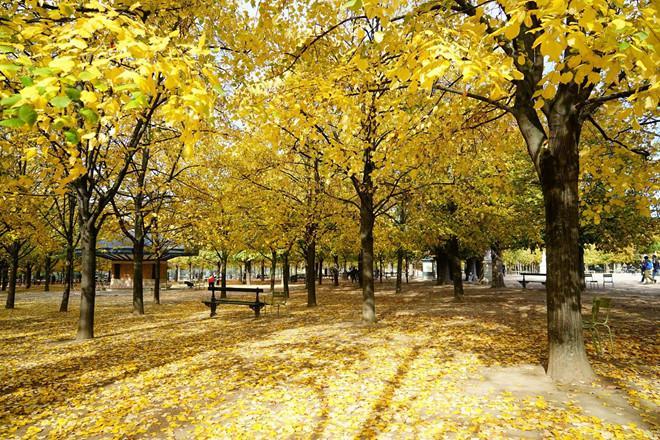 4 điểm đến 'vàng' tại châu Âu trong mùa thu-1