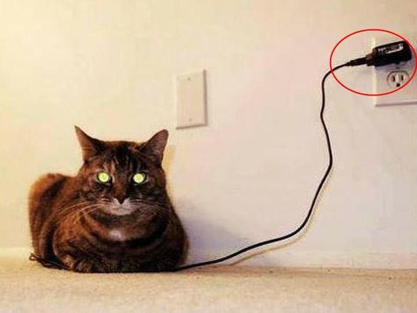 Ảnh hài: Khi 'boss' mèo bỗng tỏ ra... bất bình thường (P2)