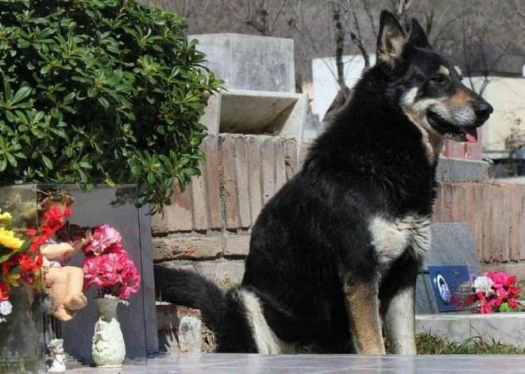 Cảm động chú chó 10 năm không rời mộ chủ-1
