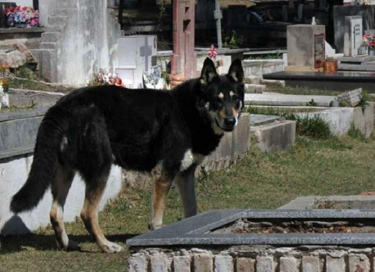 Cảm động chú chó 10 năm không rời mộ chủ-2