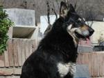 Cảm động chú chó 10 năm không rời mộ chủ