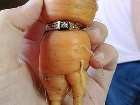 Mất nhẫn kim cương, 10 năm sau cà rốt 'đem trả'