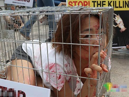 Thiếu nữ Hàn Quốc chui vào lồng vật vã để phản đối ăn thịt chó