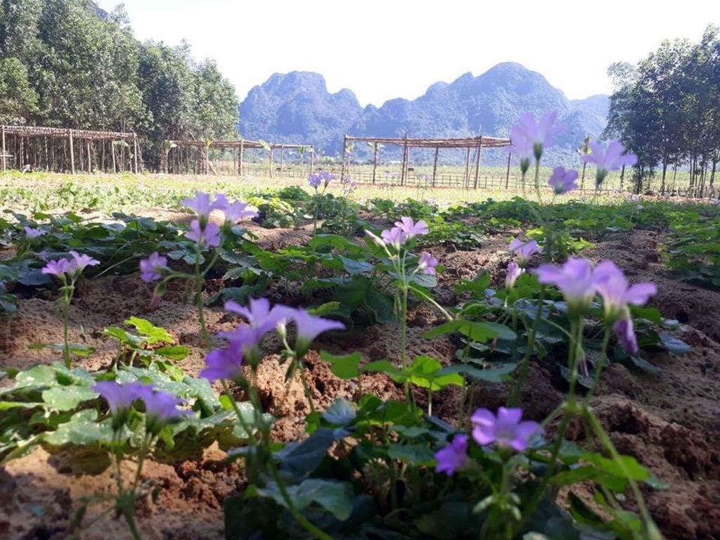 Có một nơi trốn xô bồ náo nhiệt lý tưởng ở Quảng Bình-3