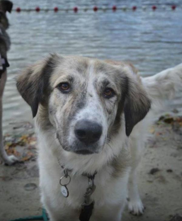 cute-homeless-dog-close-up.jpg
