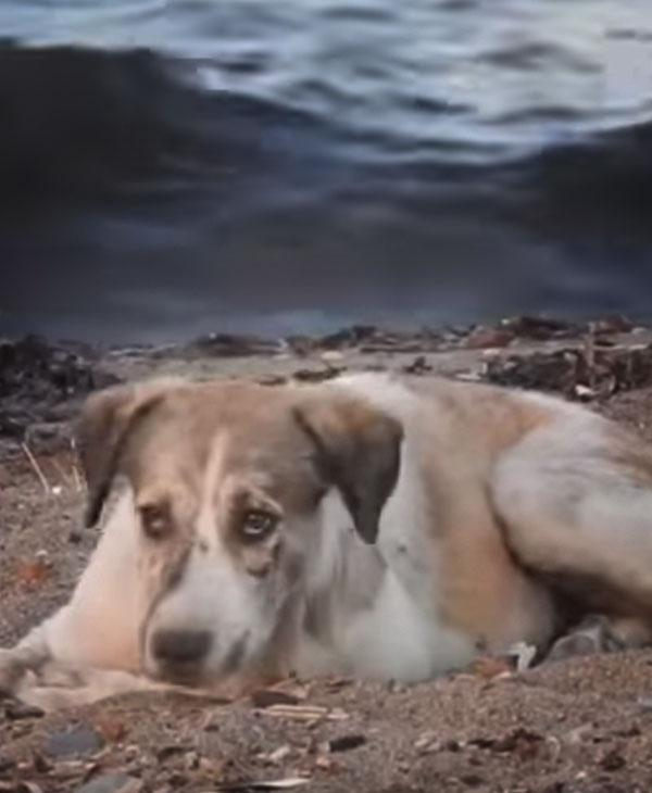 cute-homeless-dog-on-beach.jpg