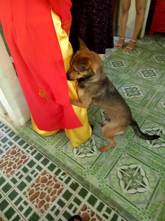 Cô chủ đi lấy chồng, chú chó quấn quýt ôm chân không muốn rời xa-1