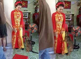 Cô chủ đi lấy chồng, chú chó quấn quýt ôm chân không muốn rời xa