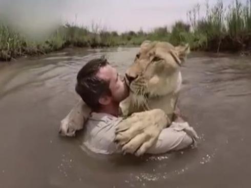 Sư tử trên bờ 'vồ' người đàn ông giữa sông và diễn biến không ngờ