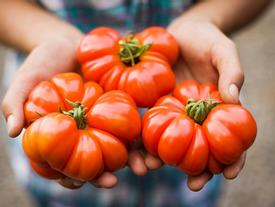 Những sự thật có thể gây sốc về quả cà chua ai cũng từng ăn
