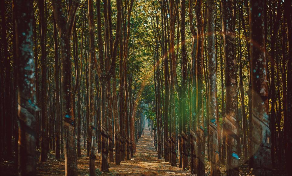 Phố núi Gia Lai đẹp hùng vĩ trong ảnh Dấu ấn Việt Nam-9