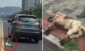 Driver beaten by outraged witnesses for dragging dog behind moving car