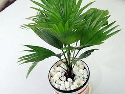 Mùa mưa chắc chắn phải trồng 8 loại cây hút ẩm, diệt nấm mốc này trong nhà