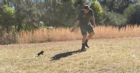 He takes a baby Tasmanian Devil out for its first run, and when it starts chasing him around…