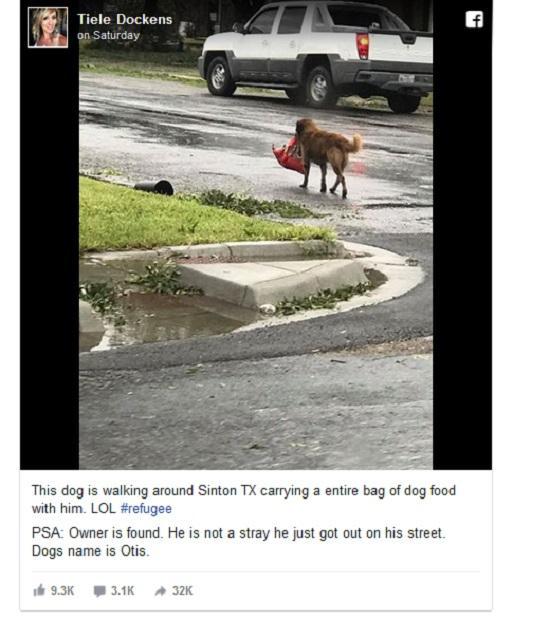 Chú chó có khả năng tiên tri gây sốt mạng xã hội-1