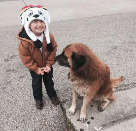 Chú chó có khả năng tiên tri gây sốt mạng xã hội-2