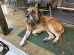 Chú chó có khả năng 'tiên tri' gây sốt mạng xã hội