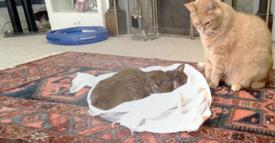 Cat's Best Friend Died From Cancer, But It's How She Says Goodbye That'll Break Your Heart