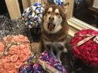 Vương Tư Thông gây shock khi tặng quà hàng hiệu cho thú cưng ngày lễ Tình nhân