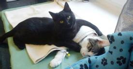 Shelter rescues cat, later realizes it has a special gift for comforting other sick animals