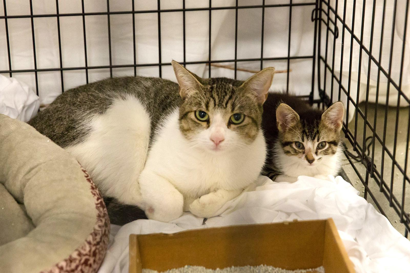 Cats in the Delco Center in Austin on Aug. 27.