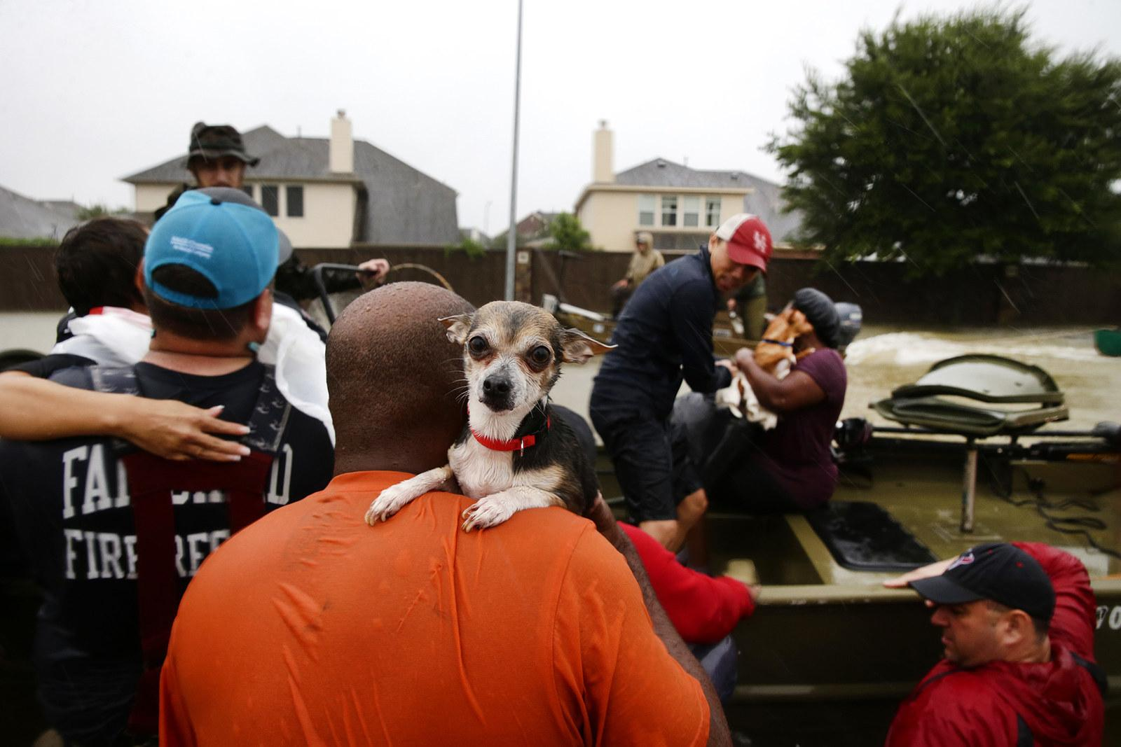 A man carries a small dog to a rescue boat in Clodine, Texas, on Aug. 28.