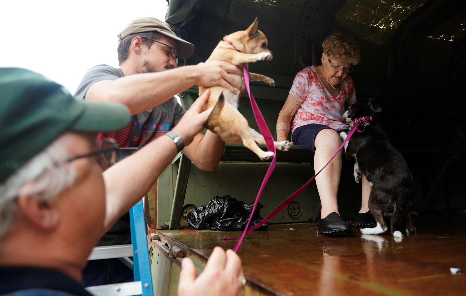 Pets are evacuated from flood waters in Dickinson, Texas, on Aug. 27.