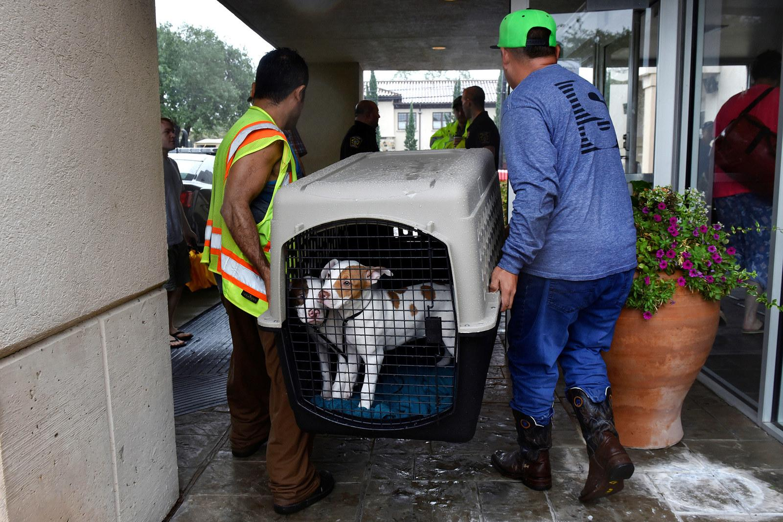 Joshua Garcia (left) and Jesse Cardenas (right) carry rescued dogs into an evacuation center in Bellaire, Texas, on Aug. 28.