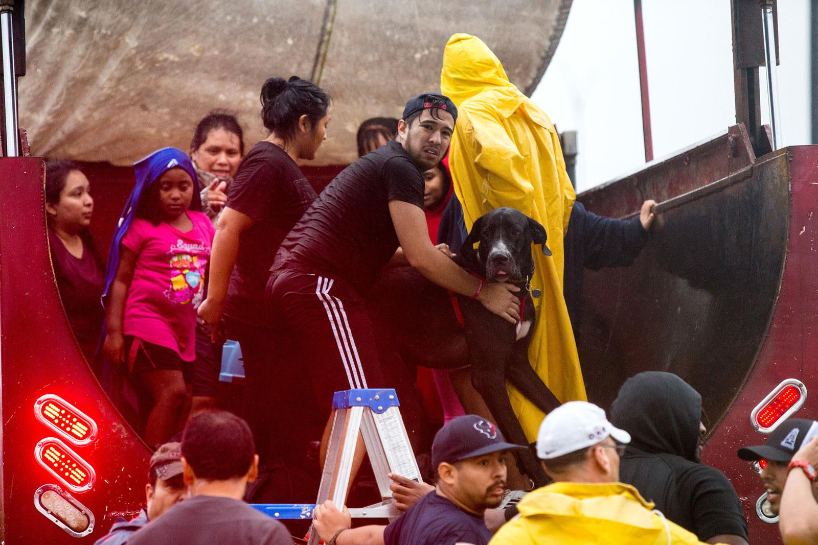 A flood victim holds his Great Dane after being rescued from his home in Houston on Aug. 28.