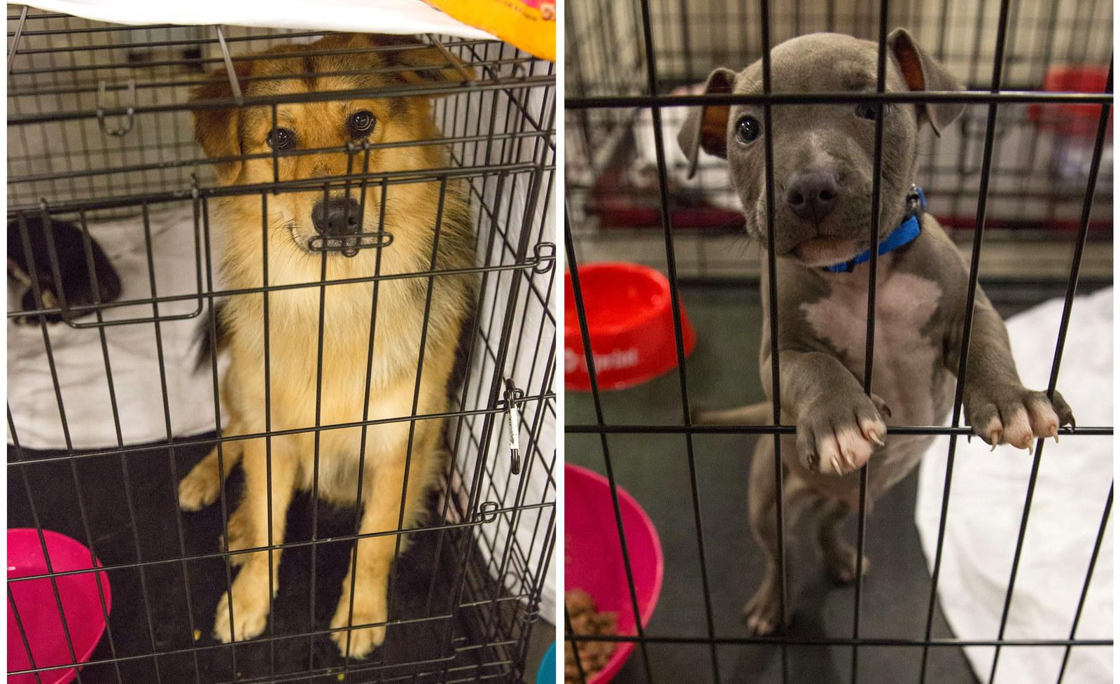 Pets belonging to evacuees sit in crates at the Delco Center in Austin on Aug. 27.