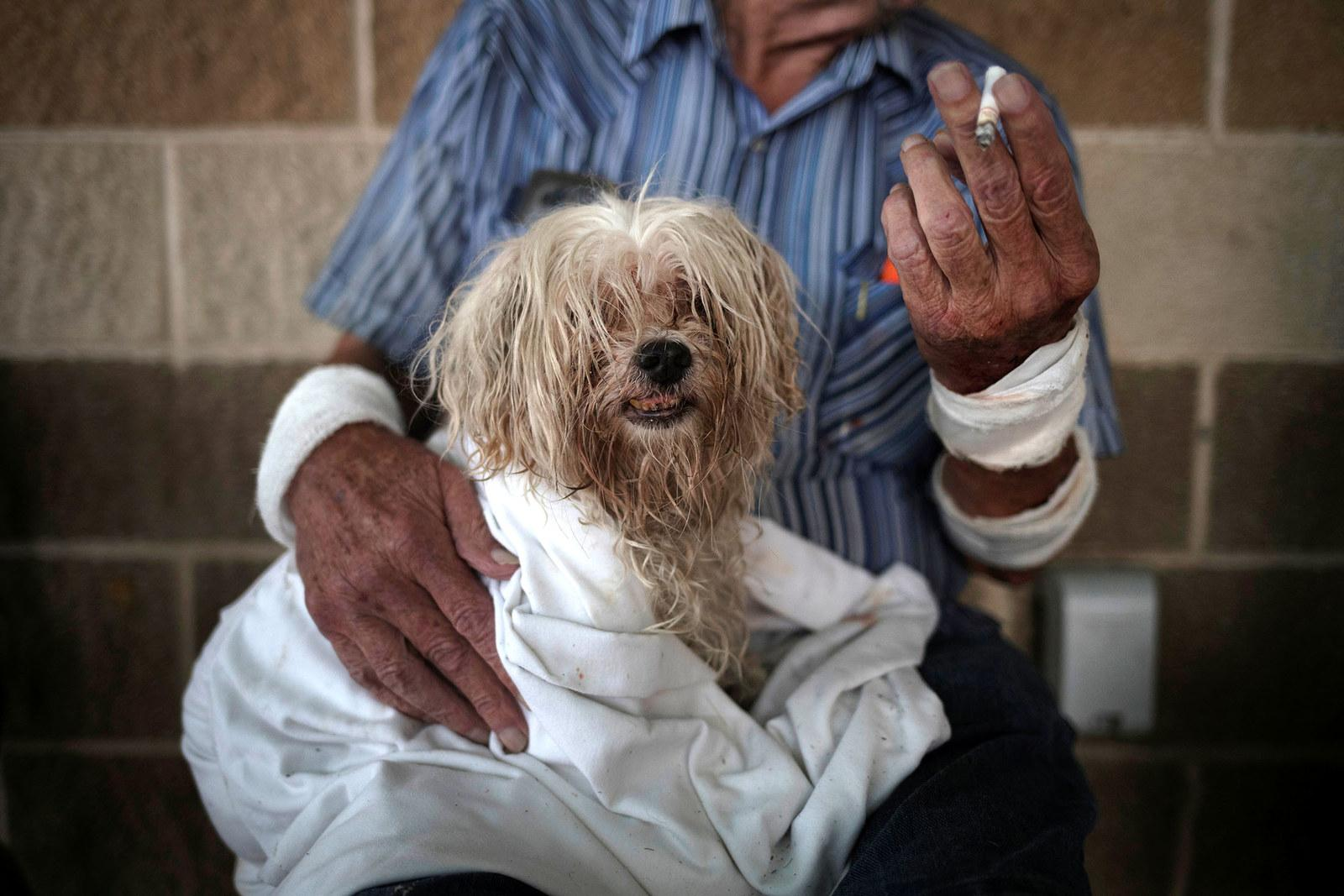 Bentley, a 10-year-old Maltese, takes refuge with his owner in a school after they lost their home in Rockport, Texas, on Aug. 26.