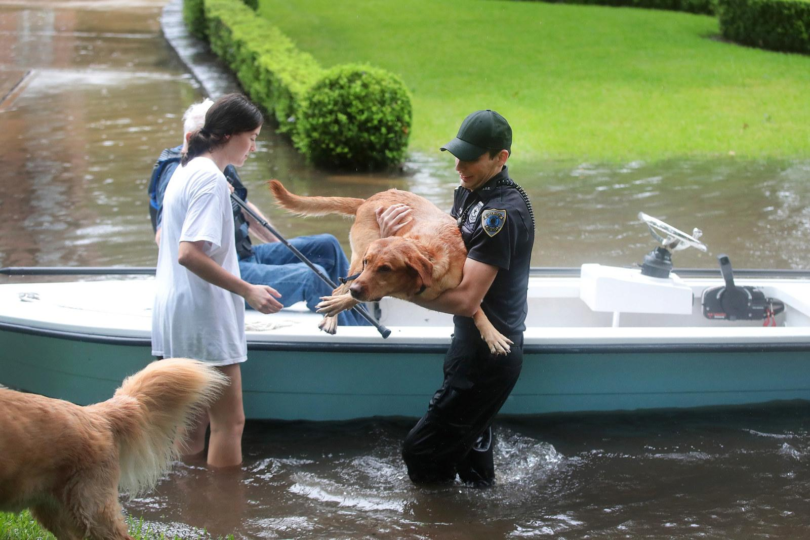 Volunteers and officers from the neighborhood security patrol help to rescue residents and their dogs in the upscale River Oaks neighborhood on Aug. 27 in Houston.