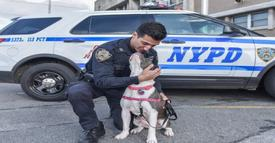Cop found dog chained in old building. Once he saw the look in her eyes, he knew he had to keep her!