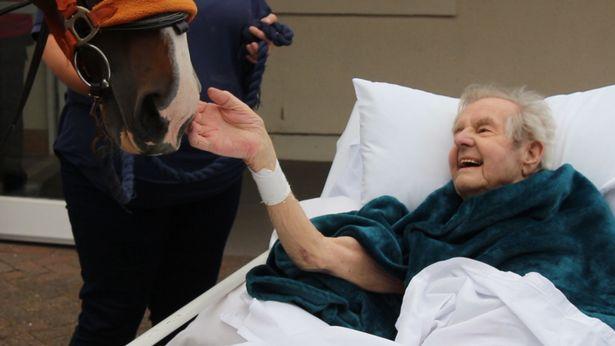 Khoảnh khắc cụ ông cho ngựa ăn lần cuối trước khi qua đời gây xúc động-3