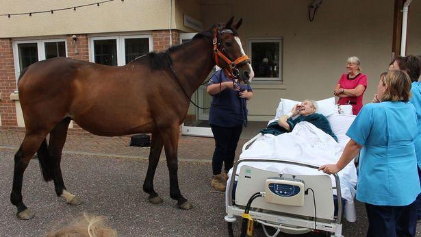 Khoảnh khắc cụ ông cho ngựa ăn lần cuối trước khi qua đời gây xúc động-2