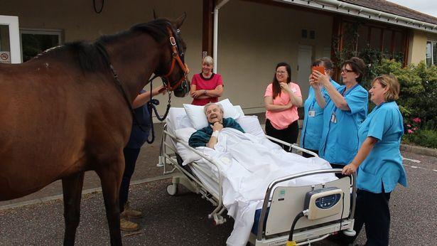Khoảnh khắc cụ ông cho ngựa ăn lần cuối trước khi qua đời gây xúc động-5