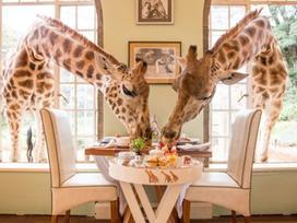 Những khách sạn dành cho người yêu động vật