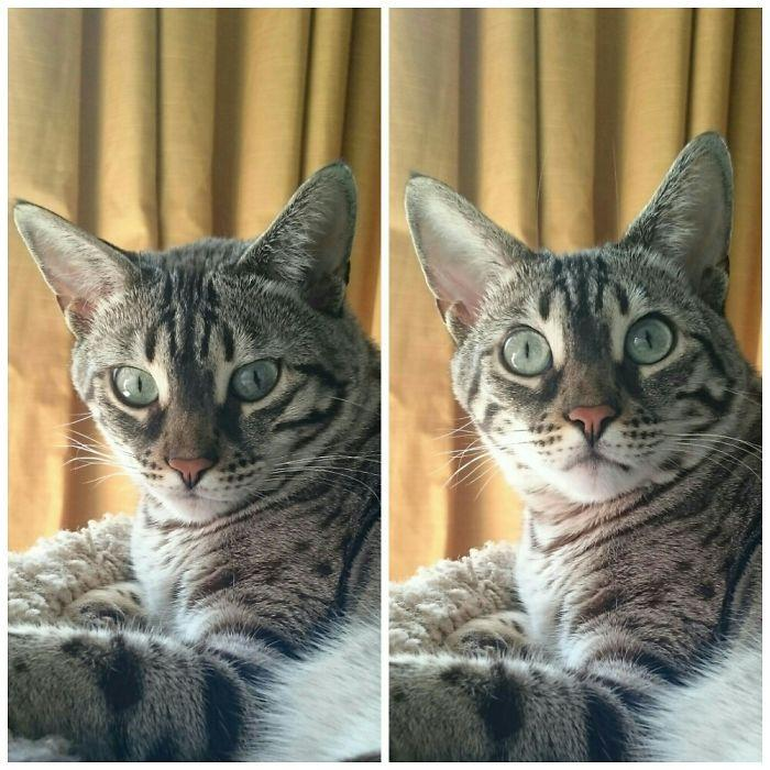 My Cat Before & After Being Told She Is Such A Good Girl