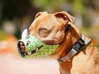 Không muốn chó bị bắt, hãy đeo ngay rọ mõm