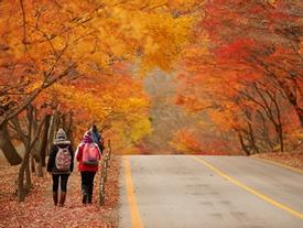 Hàn Quốc - thiên đường đỏ rực màu lá lúc thu sang