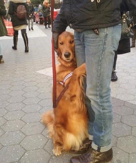 dog hugs people