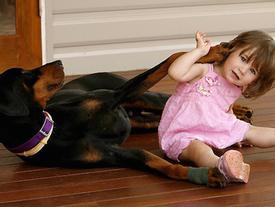Mẹ hốt hoảng khi chú chó tha con gái nhỏ ném đi xa cả mét, nhưng hóa ra đó là hành động anh hùng