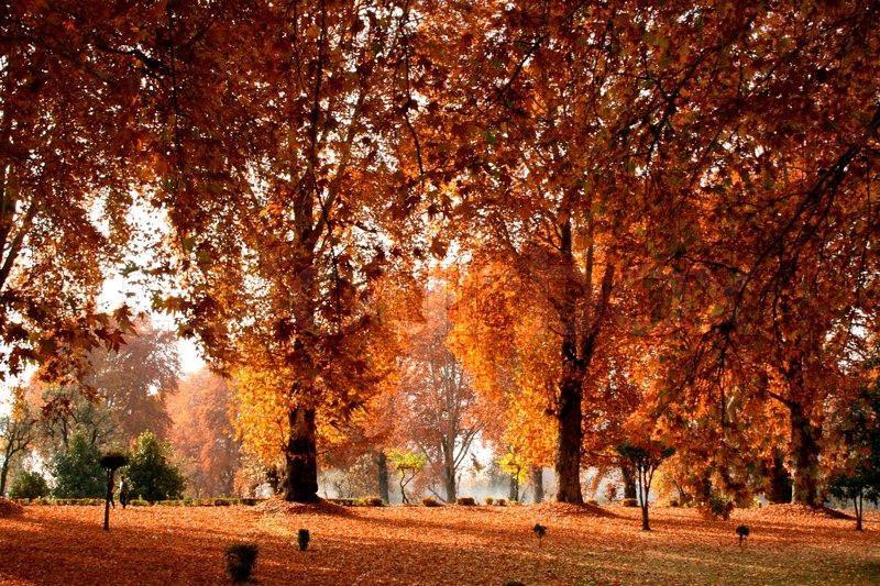 Những điểm đến lý tưởng để trải nghiệm mùa thu Ấn Độ-2