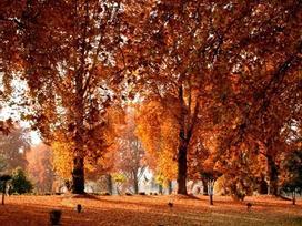 Những điểm đến lý tưởng để trải nghiệm mùa thu Ấn Độ