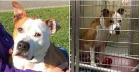"Dog with ""Heart Of Gold"" has been stuck in a shelter for more than 600 days, waiting for a home!"