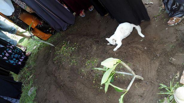 Video: Xót xa nhìn chú mèo bất lực bới mộ ông chủ vừa được chôn cất-3
