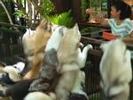 Quán cà phê dành cho những người yêu chó